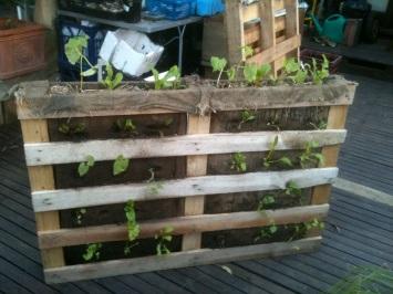 building a vertical vegetable garden site shade blog. Black Bedroom Furniture Sets. Home Design Ideas